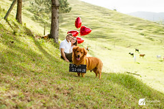 Jonielle e Jean (Ariana Eble) Tags: wedding brazil dog color green brasil canon couple heart 28mm cachorro 7d coração casamento santacatarina casal noivos balao arianaeble