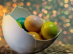 Festive Easter eggs  (Explored) (*Millie*) Tags: stilllife macromondays egg bokeh shell plate chocolateeggs colorful easter raynoxdcr250macrolens candy tabletopphotography macro