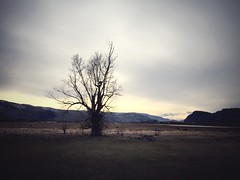 #iphoneography #iphone #iPhone6 #landscapephotography #landscape #trees #nature #naturephotography #nest #birds #birdsnest #eaglesnest #tree #beautiful #sunset #clouds #sky #dark #moody #Kamloops #explorekamloops #Tranquille #BC #BritishColumbia (Alex A Frost) Tags: iphoneography iphone iphone6 landscapephotography landscape trees nature naturephotography nest birds birdsnest eaglesnest tree beautiful sunset clouds sky dark moody kamloops explorekamloops tranquille bc britishcolumbia