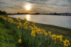 Fairhaven Spring Sunset (mliebenberg) Tags: spring sunset redskies driftwood fairhaven fairhavenlake markliebenbergphotography daffodils fyldecoast lythamstannes