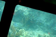 22. John Pennekamp glass bottom boat (Misty Garrick) Tags: johnpennekamp johnpennekampreef johnpennekampcoralreefstatepark coralreef florida keylargofl keylargo floridakeys atlanticocean