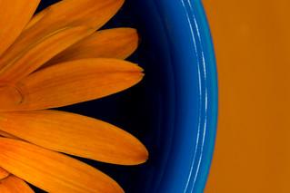 Orange and Blue - HMM