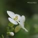 fleur 0361