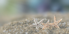 stars in my eyes (rockinmonique) Tags: 52in52 tiny small beach starfish pastel textures gold yellow blue green pretty soft ethereal moniquew canon canont6s tamron copyright2017moniquew