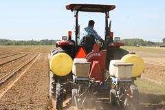 Peanut Planting 8 (UGA College of Ag & Environmental Sciences - OCCS) Tags: uga tifton campus peanuts planting
