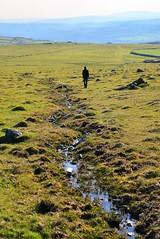 JRJ_6691 (jjay69) Tags: dartmoor holiday britain uk devon cornwall england airbnb easter lydford outdoors outdoor moors moorland barren rural countryside peaceful wild walk walking oneperson whitetor