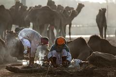 (Shyjith Kannur Photography) Tags: pushkar camel pushkarcamelfair rajasthan tribal culture morning canon