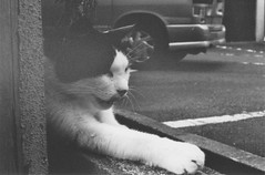 Paws of Kyoto (小川 Ogawasan) Tags: japan japon cats film