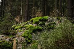 Ještěd (kaddafi210) Tags: pancolar 50mm pancolar1850 1850 m42 samsung samsungnx210 mirrorless czech retro carlzeissjena ausjena gdr nature forest place light