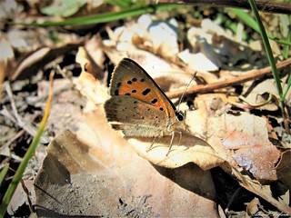 Butterfly 1221