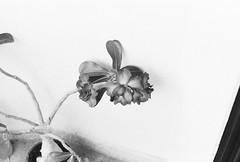 Olympus OM1 (arthurkha) Tags: kentmere 400 olympus om1 tetenal utrafin plus blackwhite photography