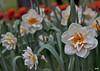 Flores de primavera. El Huerto de la Farmacia.