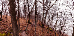 Winding River Trail (Tony Webster) Tags: frontenac frontenacstatepark lakepepin minnesota mississippiriver earlyspring forest leaves spring statepark trees unitedstates us