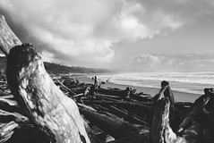 grappling.with.luminous.doom (jonathancastellino) Tags: tofino bc britishcolumbia beach winter mist fog branch log sky cloud clouds leica maryoliver poetry quote drift wood weather