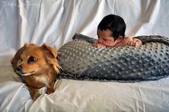 JuanAnnouncements-38 (TrishaLyn) Tags: baby babyboy birthannouncement people juanmartinguzman babies dogs pomchi pomeranian chihuahua animals sanleandro california newborns