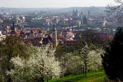 Spring is here! (Eastern Traveller) Tags: prague czechrepublic bohemia spring apricot blossom strana mala stranska petrin hill old town charles bridge vltava