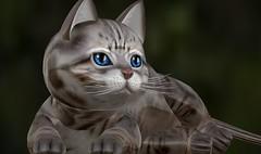 Snapshot_012 (ReenaStark) Tags: secondlife sl animal animals cat cats kitten kittens kitties kitty feline felines kittycats