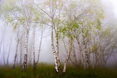 Spring.... (Marco Allegro) Tags: natura nebbia paesaggi alberi calma