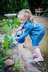 Day 112 ~ Gramma's garden helper (champbass2) Tags: day112 day112365 3652017 2017 day365project gardenhelper granddaugher wateringcan makingthingsgrow