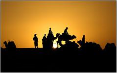Ombre del Deserto... (rogilde - roberto la forgia) Tags: marocco desert deserto tramonto sunset luce cammello dromedario turbante controluce guida silhouette backlight camel dromedary dune