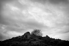 Agglestone Summit (Photograferry) Tags: dorset southcoast uk nopeople outside landscape nature isleofpurbeck coast studland trees clouds lonetree path steps overcast agglestone devilsanvil rock gorse godlingstonheath nationalnaturereserve