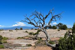 Canyon Land Utah (sellers8847) Tags: tree canyonland nationalpark utah nikon d7200