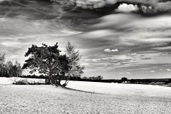 The tree (wimkappers) Tags: blackwhitephotos bw monochrome dutch dutchlandscape sand sands tree holland