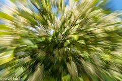 PPF_0848-12 (pavelkricka) Tags: holbrook fields village oilseed rape motion blur deliberate intentionalcameramovement icm