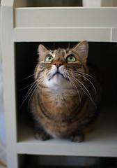 Up? (Matjaž Skrinar) Tags: 300mmf14 100v10f cat 500v20f