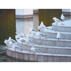 The Council (borisvasilev) Tags: bird birds stairs white water parcphœnix phœnix parc park nature flock group seagull pond smalllake cotedazur frenchriviera french nice france