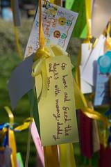 Nazanin's Tree (SReed99342) Tags: london uk england westhampstead nazaninzaghariratcliffe tree iran woman arrested iranian fortunegreen