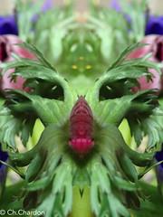 (christine chardon) Tags: fleurs flowers flores fiori innommés creatureart creaturedesign creation creature nature plante botanic photoart masque personnage fantastique mysterious printemps spring anémone