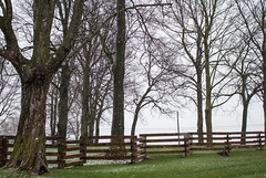 Naked Spring Trees (marylea) Tags: apr6 2017 spring snow trees farm fence snowfall earlyspring stark grayskies mist rural danhoeyfarm washtenawcounty michigan