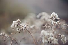 Floralistic (Zesk MF) Tags: floral zesk nikon sigmaart 18mm 18 flowers