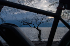 Fav tree framed by fav bike (LEXPIX_) Tags: tree water lake champlain waterfront bike bicycle trek xm700 ebike vt nikon d500 2470 28 lexpix