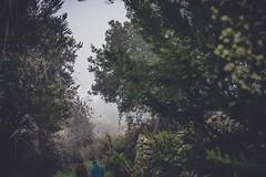 Huella a huella, leyeron aquel mapa de verdes muros y largas trenzas. #canarias #tenerife #naturaleza #paisaje #human #relax #green #trees #landscape #outdoor (teresayanesfoto&gráfica) Tags: landscape relax outdoor paisaje tenerife canarias green naturaleza trees human