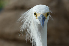 Birdie (My Best Images) Tags: bird birdie seaworld sandiego abigfave california usa stare gaze dmcfz300 panasonic panasonicdmcfz300