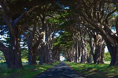 Point Reyes National Seashore, California (nejmantowicz) Tags: california ngc pointreyes seashore nejmantowicz magicmomentsinyourlifelevel1