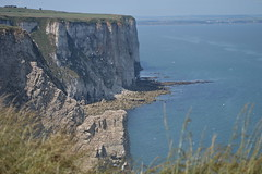 Bempton Cliffs, Yorkshire, UK (CoasterMadMatt) Tags: uk greatbritain summer england cliff english nature face landscape photography bay coast countryside chalk seaside view natural photos unitedkingdom britain yorkshire united great north july reserve kingdom cliffs east erosion riding coastal photographs naturereserve views gb coastline british bays viewpoint northeast exposed headland cliffface rspb bemptoncliffs bempton eastridingofyorkshire eastriding chalkcliffs 2013 coastermadmatt