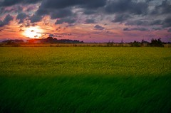 Layers of August (MilaMai) Tags: pink sunset house field clouds suomi finland landscape colorful yellowflower mustard layers
