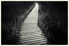 Bohlenweg (duesentrieb) Tags: blackandwhite bw monochrome germany landscape deutschland europa europe balticsea boardwalk schwarzweiss landschaft ostsee mecklenburgvorpommern bohlenweg tumblr darserort fischlanddars bornamdars