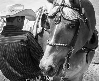Vaquero y Su Caballo