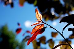 Light (Maria Symeonidou) Tags: light sky plant blur tree leaves blurry