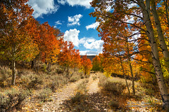Lost and Forgotten Road (Darvin Atkeson) Tags: road autumn trees mountains color fall leaves forest high rainbow grove nevada country sierra aspen darvin atkeson darv liquidmoonlightcom