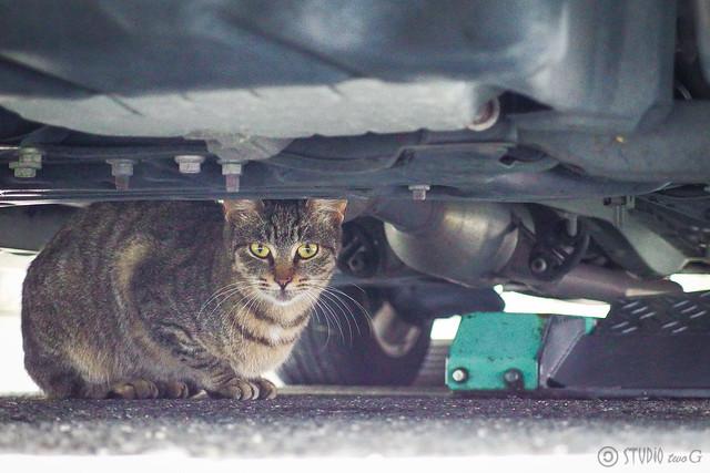 Today's Cat@2013-11-16