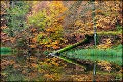 Tableau d'automne (Excalibur67) Tags: autumn trees nature water forest automne landscape nikon herbst arbres paysage tamron reflexion reflets sousbois d90 vosgesdunord forts sp70300divcusd