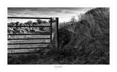 half a gate to nowhere…... (bevscwelsh) Tags: northwales sonynex6 sonye35mm