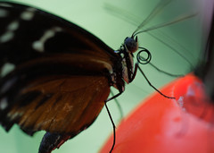 "Butterfly profile -  Vancouver Aquarium • <a style=""font-size:0.8em;"" href=""http://www.flickr.com/photos/30765416@N06/11393026525/"" target=""_blank"">View on Flickr</a>"