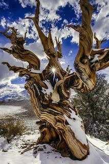 Ancient Eye, White Mountains