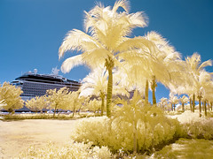 CUR024 (K9 Cu Images) Tags: cruise cruising palm palmtrees palmtree infrared caribbean celebritycruises caribbeancruise lifepixel celebrityeclipse 590nm supercolorir